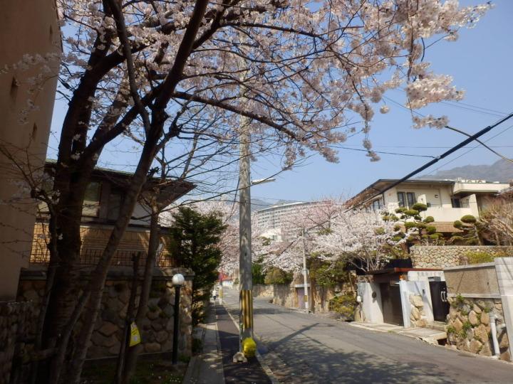 桜並木(海星病院の道すがら)