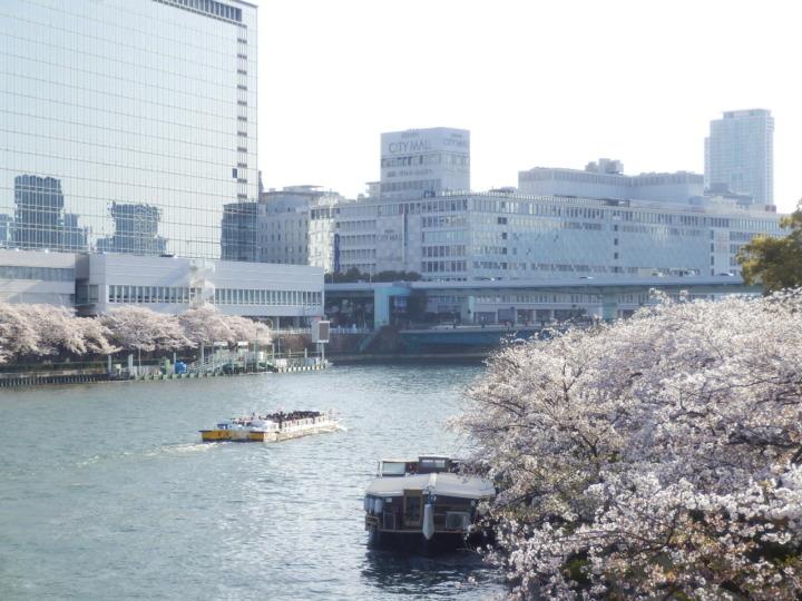 橋の上から桜とビル