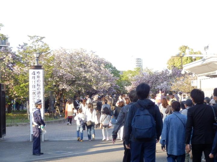 桜の通り抜け入り口