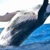 海を殺すプラスチックのごみ