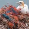 海のプラスチックを減らす世界の企業。日本は?