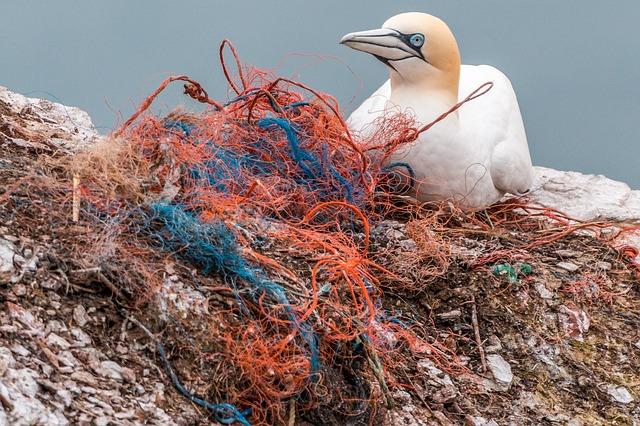 ゴミと海鳥