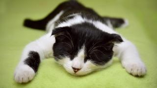 cat-眠り-休息