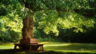 tree-holiday
