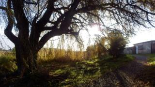 トラヴィス風景写真