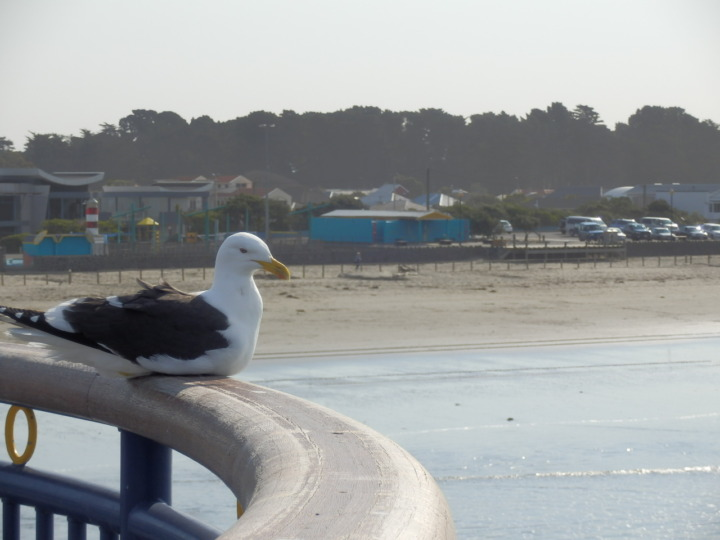 桟橋と海鳥