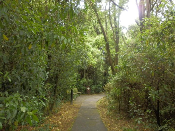 リッカートンブッシュ-原生林1